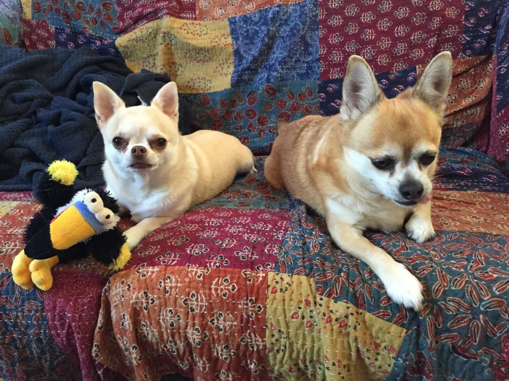 Two small dogs sitting on a couch with a stuffed toy toucan